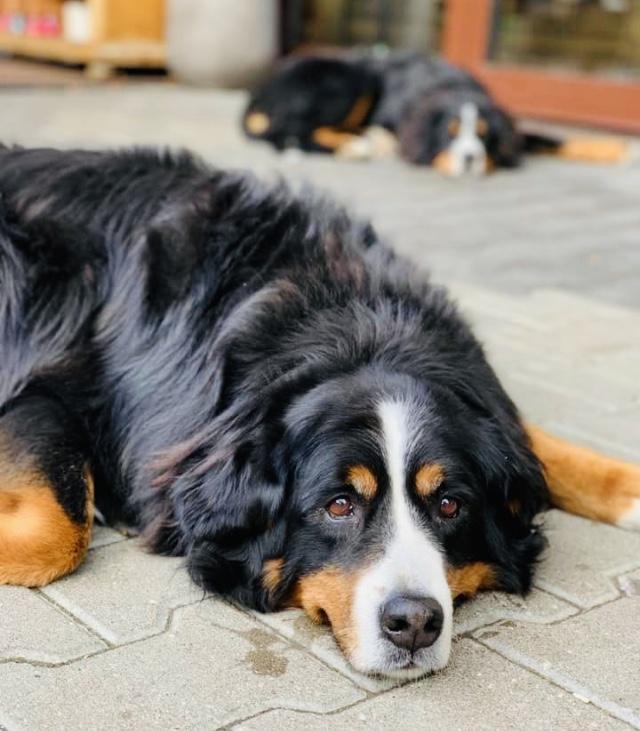 Hofladen beim Moar in Grasbrunn Hofhund